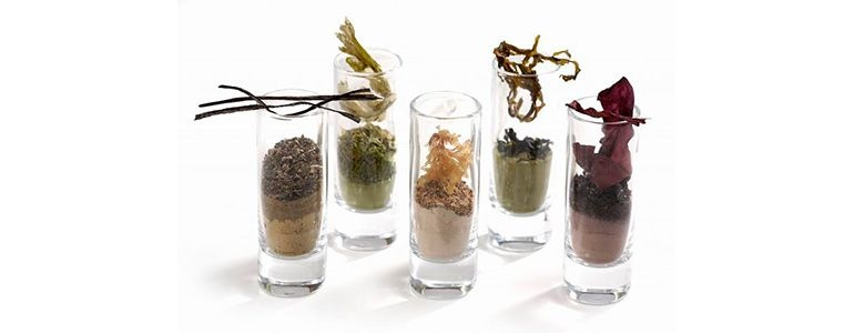 Изображение Морские водоросли в косметологии