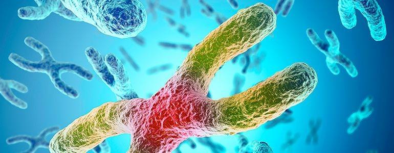 Изображение Здоровье с ферментной терапией: что такое теломераза